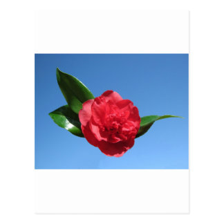 Red Camelia in Blue Sky Post Card