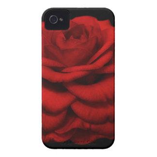 Red Camellia iPhone Case