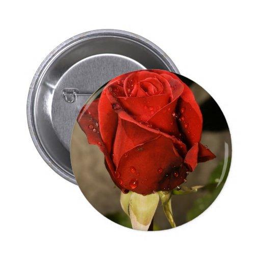 Red Camp David Hybrid Tea Rose Pins
