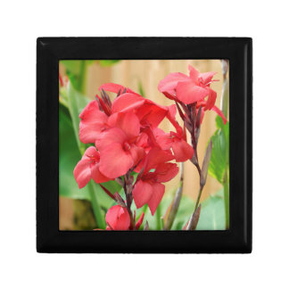 Red canna flowers gift box