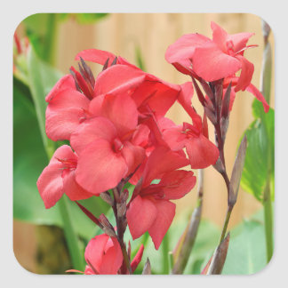 Red canna flowers square sticker