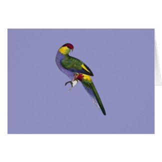 Red Capped Parakeet Parrot Bird Greeting Card