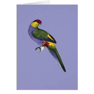 Red Capped Parakeet Parrot Bird Note Card
