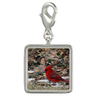 Red Cardinal Bird in Leaves