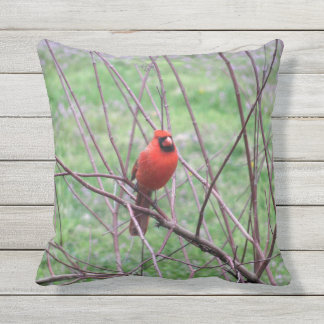 Red Cardinal Bird Outdoor Cushion