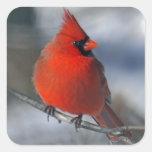 Red Cardinal Bird Square Stickers