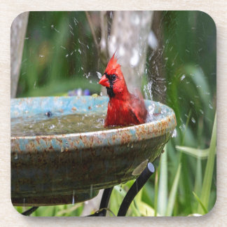 red cardinal coasters