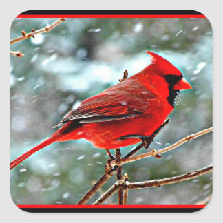 Red Cardinal in the Snow Square Sticker