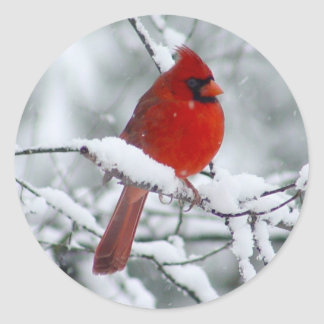 Red Cardinal in the Snow Sticker
