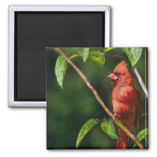 Red Cardinal Magnet