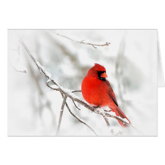 Red Cardinal (Note Cards) Card