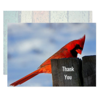 Red Cardinal on Wooden Stump Thank You Card