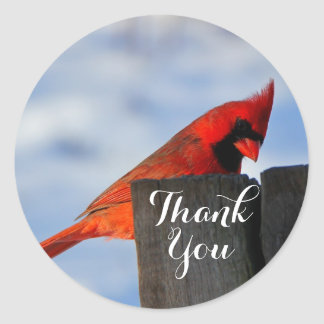 Red Cardinal on Wooden Stump Thank You Classic Round Sticker