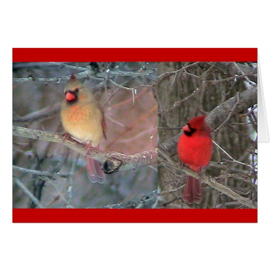 Red Cardinal Pair Card