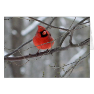Red Cardinal Perch (Front View) Card