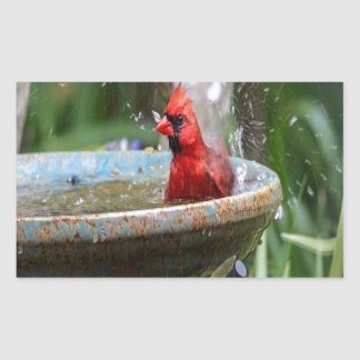 red cardinal rectangular sticker