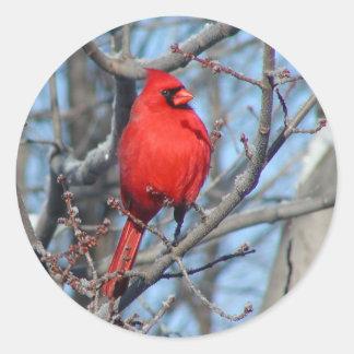 Red Cardinal Round Sticker