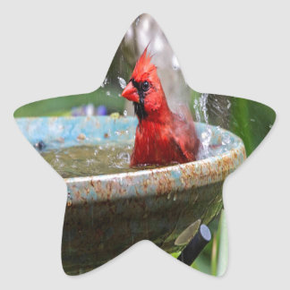 red cardinal star sticker