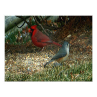 Red Cardinal Titmouse Birds Photo Print
