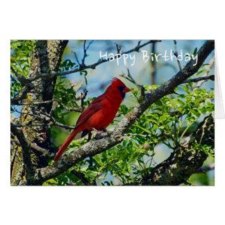 Red Cardinal  Wild Bird Photograph Card