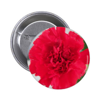 Red Carnation Pinback Button