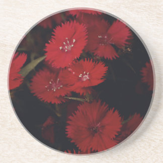 red carnations coaster