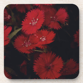 red carnations drink coasters