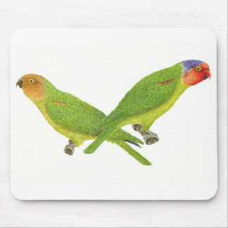 Red-Cheeked Parrot Pair Mouse Pad