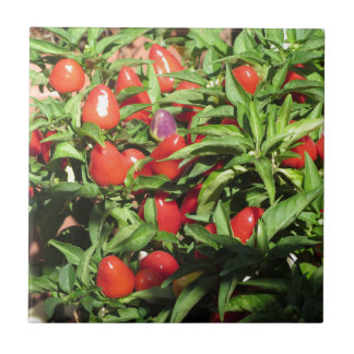 Red chili peppers hanging on the plant ceramic tile