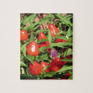 Red chili peppers hanging on the plant jigsaw puzzle
