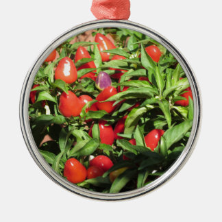 Red chili peppers hanging on the plant metal ornament