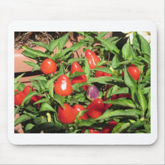 Red chili peppers hanging on the plant mouse pad
