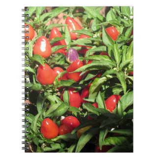Red chili peppers hanging on the plant notebook
