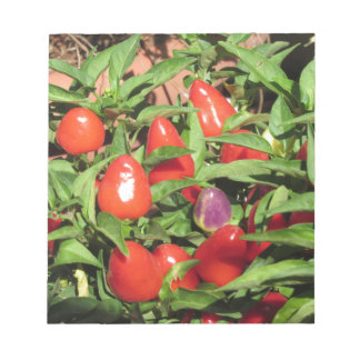 Red chili peppers hanging on the plant notepad