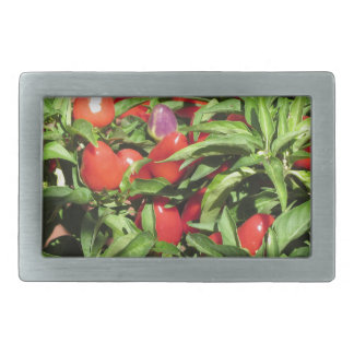 Red chili peppers hanging on the plant rectangular belt buckle