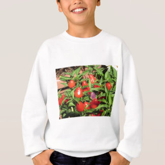Red chili peppers hanging on the plant sweatshirt