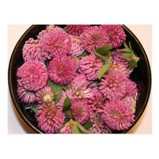 Red Clover Blossoms Postcard