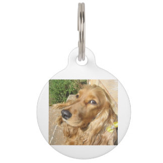 red Cocker_Spaniel_red Pet Name Tag