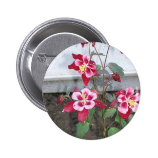 Red Columbines Button