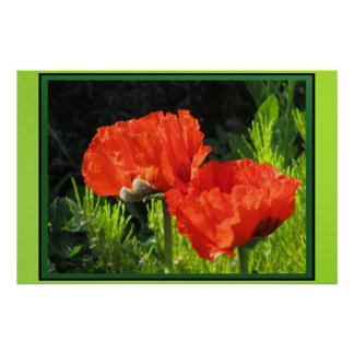 Red Corn Poppies Print