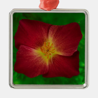 Red Cosmos Flower Design Silver-Colored Square Decoration