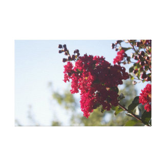 Red Crepe Myrtle Canvas Print