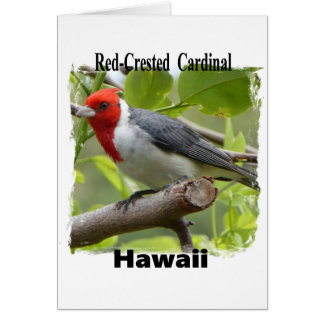 Red-crested Cardinal Card
