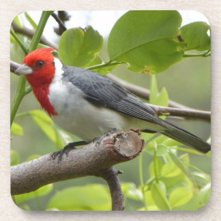 Red-crested Cardinal Drink Coasters