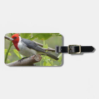 Red-crested Cardinal Luggage Tag
