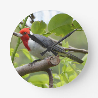 Red-crested Cardinal Round Clock