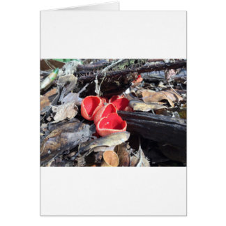 Red Cup Fungus Card
