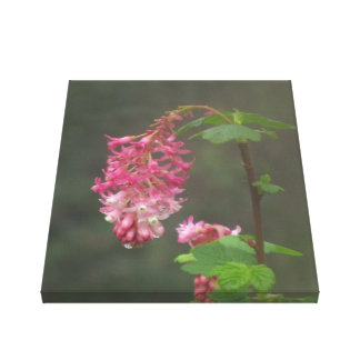 Red Currant Flower Canvas Prints