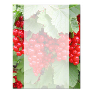 Red Currants on the Plant. Green Leaves. 11.5 Cm X 14 Cm Flyer