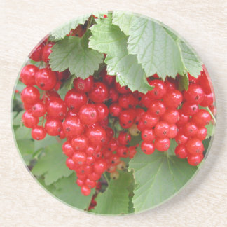 Red Currants on the Plant. Green Leaves. Drink Coaster